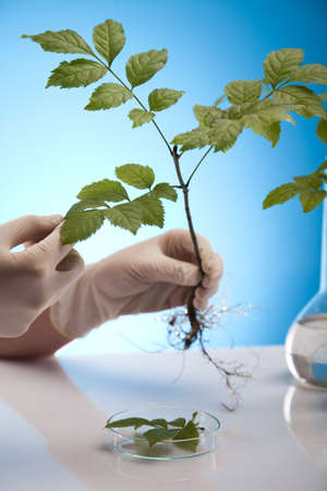 Working in a laboratory and plants  photo