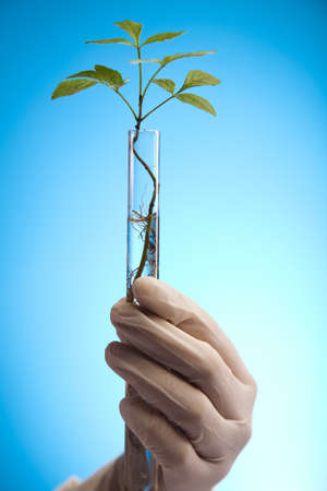 Ecology laboratory experiment in plants Stock Photo - 10078506