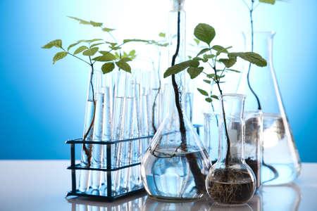 genomics: Plants  and laboratory