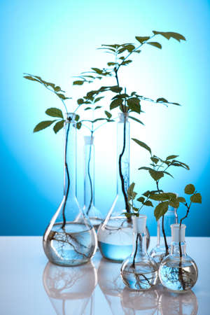 geneticist: Research, plants growing in test tubes in laboratory  Stock Photo