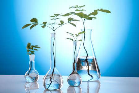 germinate: Ecology laboratory experiment in plants Stock Photo