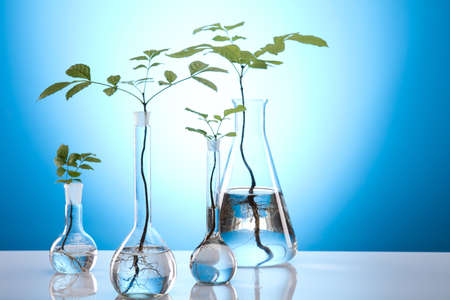 geneticist: Ecology laboratory experiment in plants Stock Photo