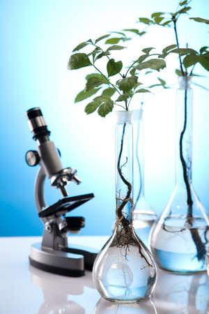 genomics: Floral science in  laboratory  Stock Photo
