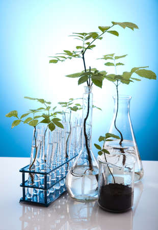 Eco laboratory  Stock Photo - 10494266