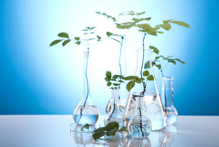 epidemiology: Ecology laboratory experiment in plants Stock Photo