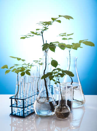 agricultural engineering: Ecology laboratory experiment in plants Stock Photo