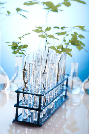 genomics: Research, plants growing in test tubes in laboratory  Stock Photo