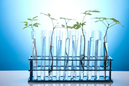 agricultural engineering: Chemistry equipment, plants laboratory glassware