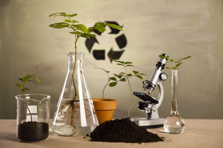 experimenting: Experimenting with flora in laboratory  Stock Photo