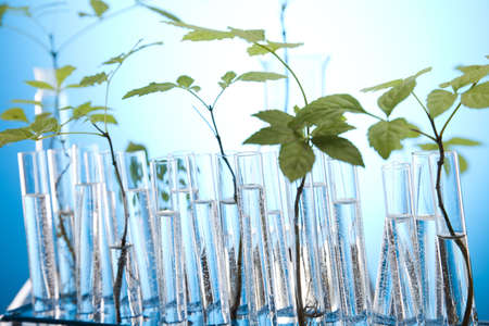 agricultural engineering: Experimenting with flora in laboratory  Stock Photo