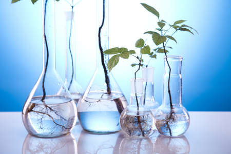 genomics: Experimenting with flora in laboratory  Stock Photo