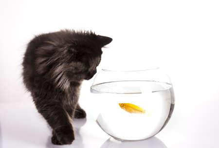 Cat and fish photo
