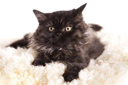 Little kitten photo