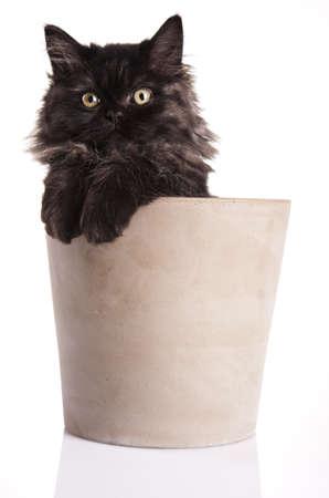 Happy cat Stock Photo - 10494337