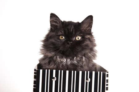 Happy cat photo