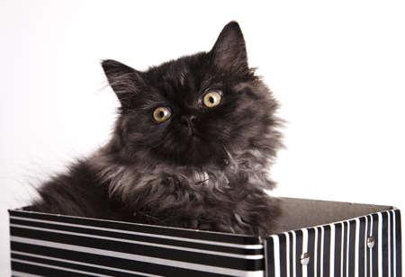 felis silvestris catus: Funny kitten