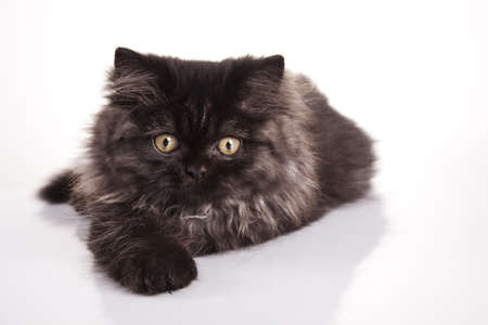 Kitten on a white background Stock Photo - 10494478