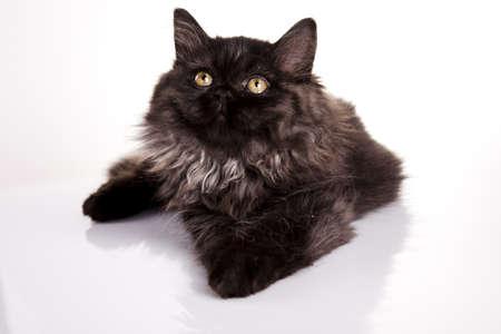 Funny kitten photo