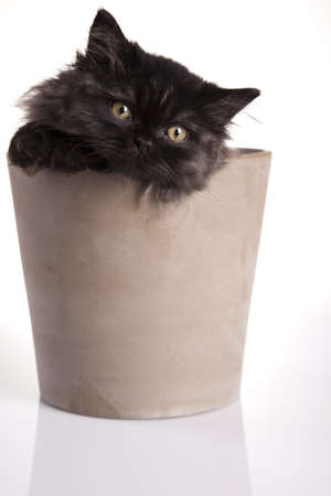 Kitten on a white background Stock Photo - 10494321