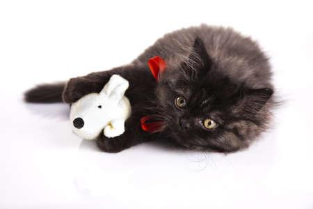 felis silvestris catus: Kitten on a white background