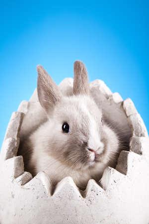 Cute baby bunny Stock Photo - 10494695