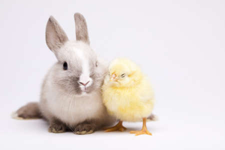 Rabbit on chick Stock Photo - 10494339