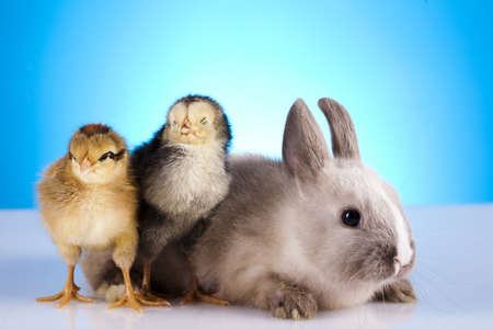 Chick and bunny Stock Photo - 10494601