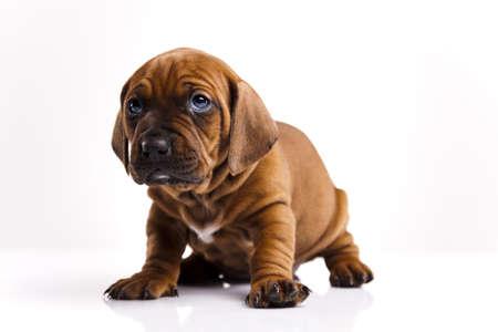 sad dog: Dog