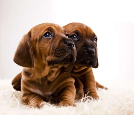 Psy dla dzieci