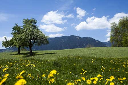 Alps spring photo