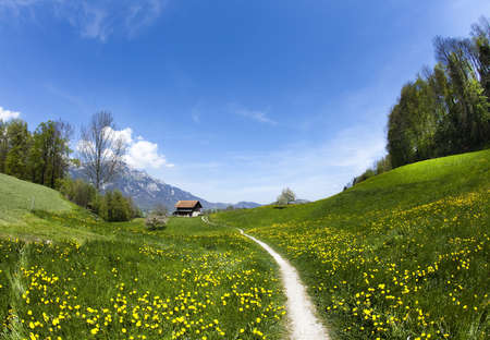 Spring landscape in mountains, apls photo