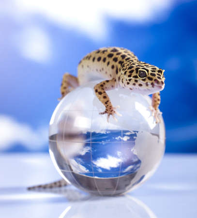 primal: Gecko in globe Stock Photo