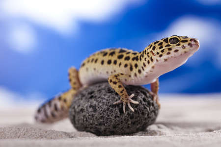 Gecko in a blue sky background photo