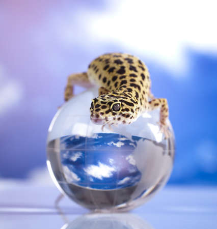 Gecko in globe photo