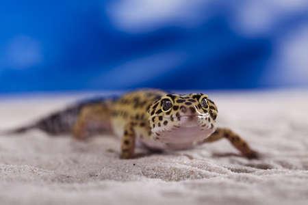 Small gecko reptile lizard photo