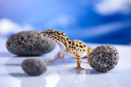 Gecko reptile, Lizard photo
