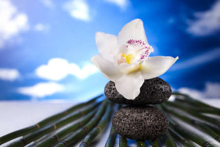 Still life, stone and zen Stock Photo - 12140749