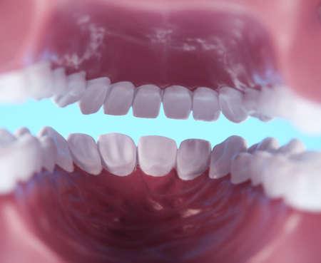 Teeth Stock Photo - 13502940