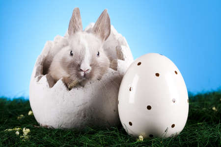 Little bunny, Easter photo