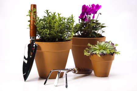 Gardening time, garden Stock Photo - 14234525