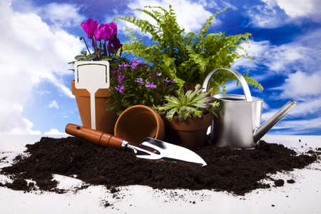 Gardening equipment on green plant photo