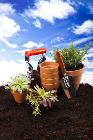 Garden on blue sky background  Stock Photo - 14234260