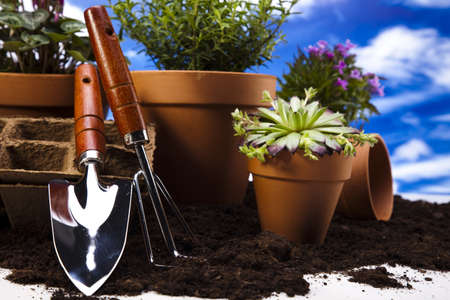 watering pot: Flowers and garden tools on blue sky background