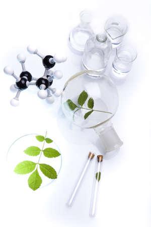Ecology laboratory, experiment  Stock Photo