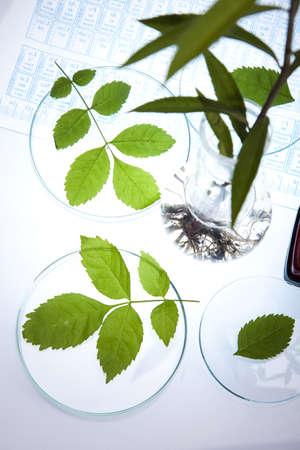 pipeptte: Plant laboratory