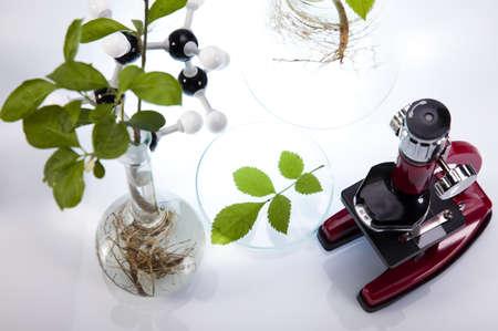 pipeptte: Microscope Stock Photo