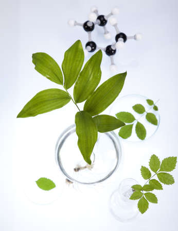 Working in a laboratory and plants  Stock Photo