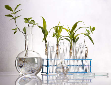 laboratory glass: Experimenting with flora in laboratory  Stock Photo