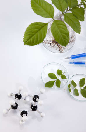pipeptte: Ecology laboratory, experiment  Stock Photo