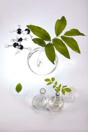 pipeptte: Experimenting with flora in laboratory  Stock Photo